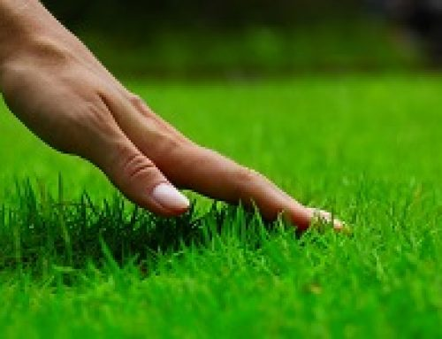 Kako da zasadite savršen travnjak
